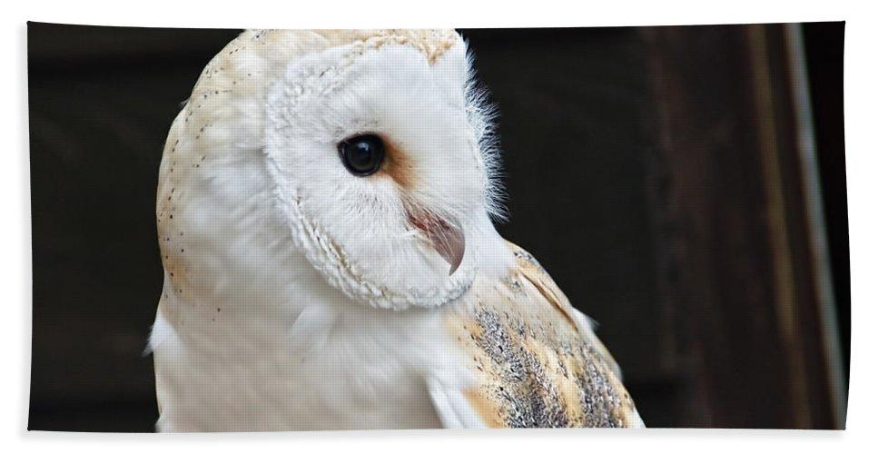 Barn-owl Hand Towel featuring the photograph Barn Owl by Susie Peek