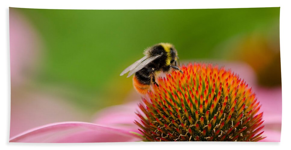 Gardening Hand Towel featuring the photograph Bee by TouTouke A Y