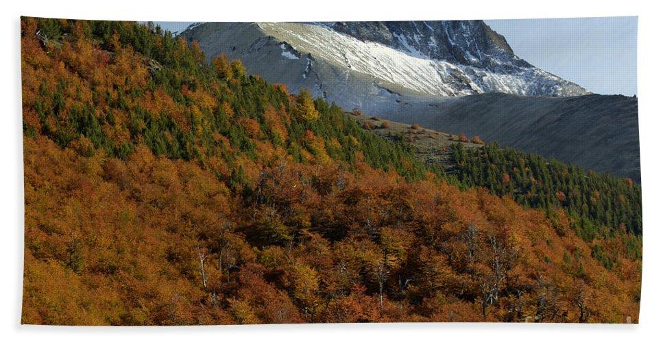 Nothofagus Bath Sheet featuring the photograph Beech Forest, Chile by John Shaw