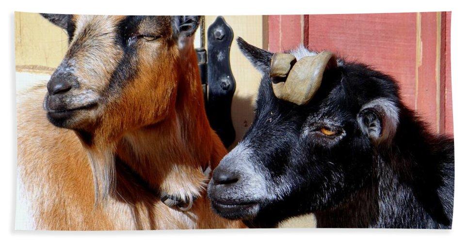 Animals Hand Towel featuring the photograph Best Friends by Ed Weidman