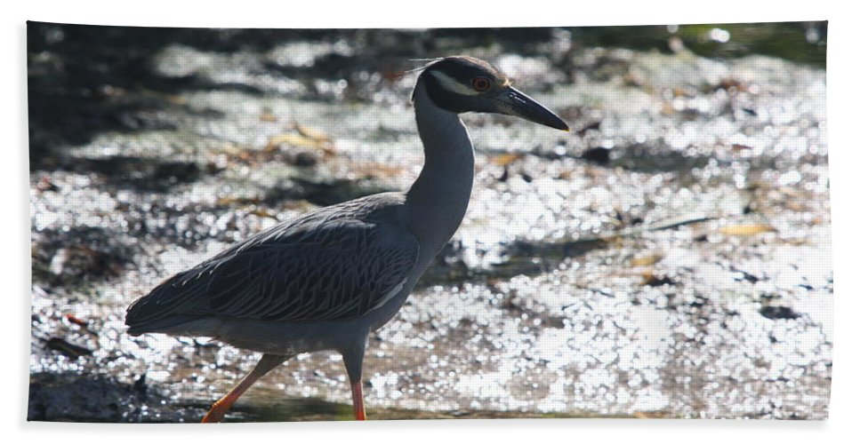 Night-heron Bath Sheet featuring the photograph Black-crowned Night-heron by Christiane Schulze Art And Photography