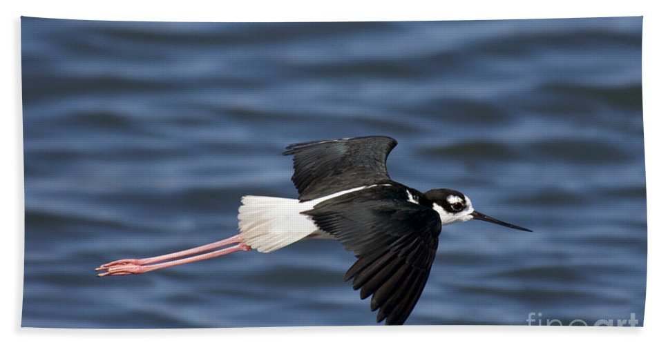 Black-necked Stilt Hand Towel featuring the photograph Black-necked Stilt by Anthony Mercieca