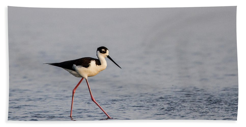 Doug Lloyd Hand Towel featuring the photograph Blacknecked Stilt by Doug Lloyd