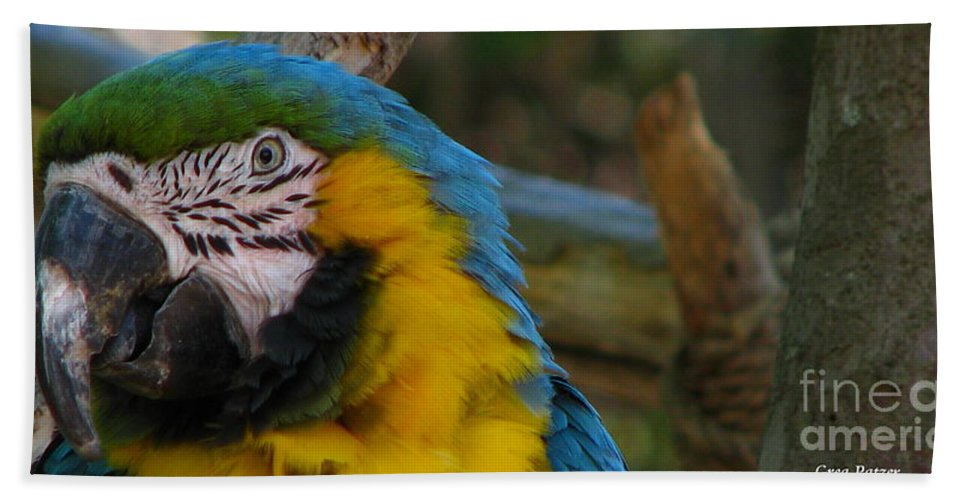 Patzer Bath Sheet featuring the photograph Blue And Gold by Greg Patzer