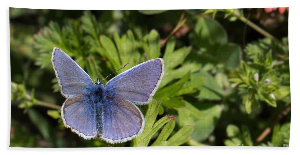Bulgaria Hand Towel featuring the photograph Blue Beauty by Jivko Nakev