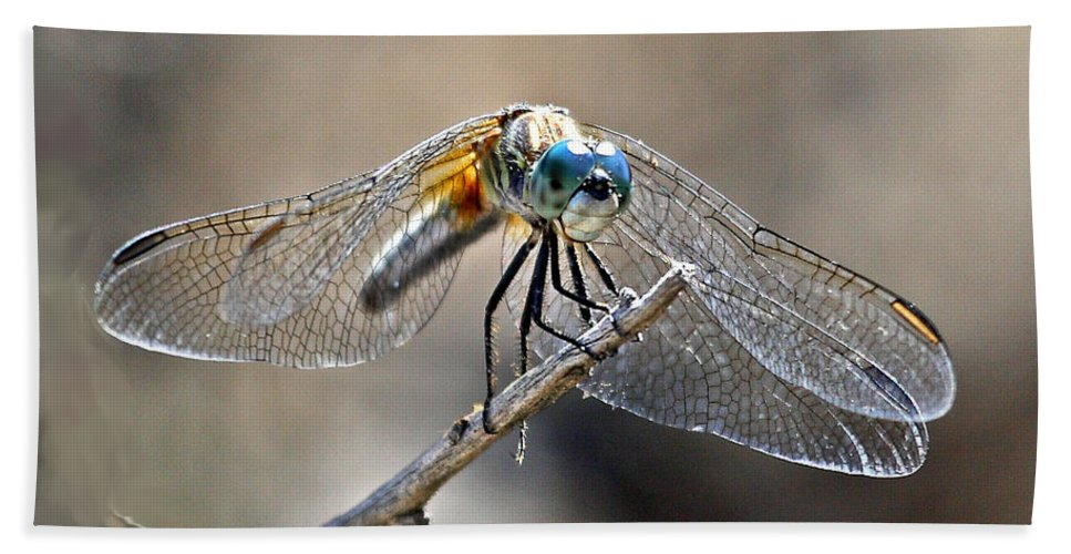 Nature Bath Sheet featuring the photograph Blue Dasher by David Salter