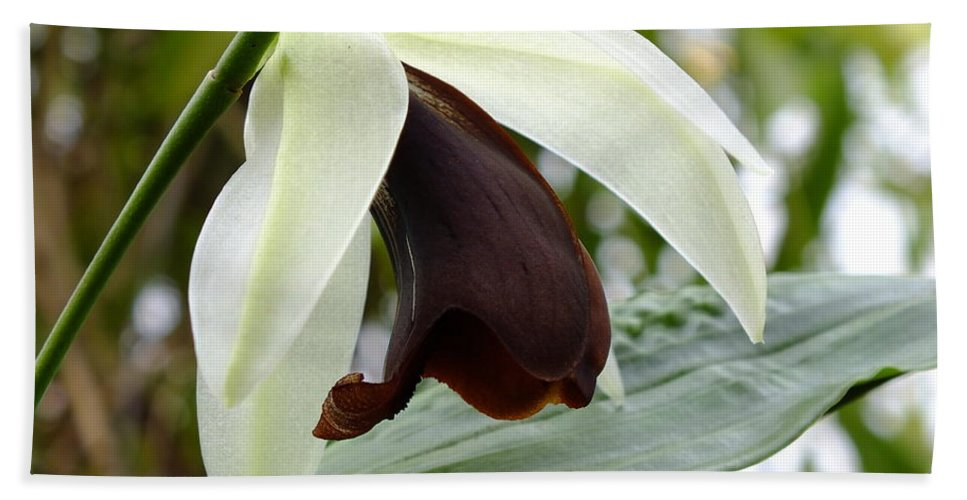 Orchid Bath Sheet featuring the photograph Brown Beauty by Yenni Harrison