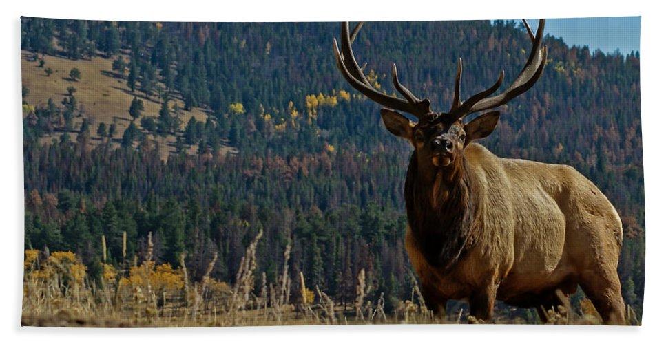 Bull Elk Bath Sheet featuring the photograph Bull Elk by Ernie Echols