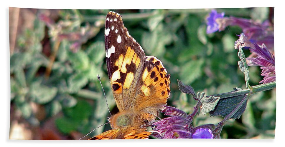 Butterfly Hand Towel featuring the photograph Butterfly by Cassie Peters