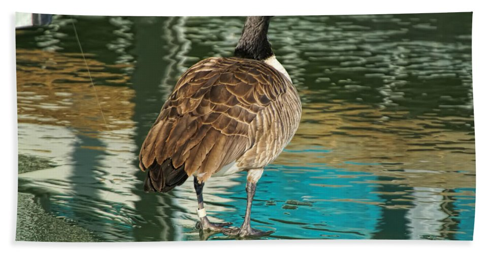 Goose Hand Towel featuring the photograph Canadian Goose by Alan Hutchins