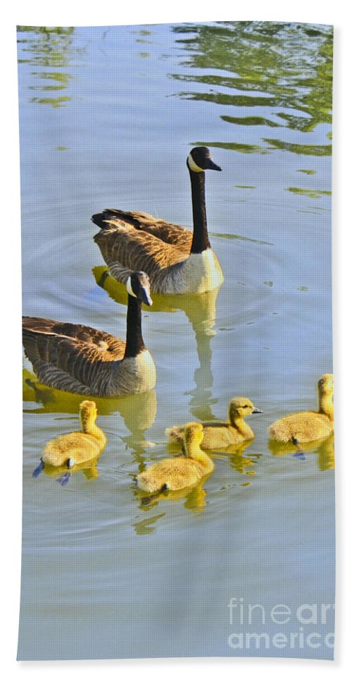 Canadian Hand Towel featuring the photograph Canadian Goose Family by Barbara Dean