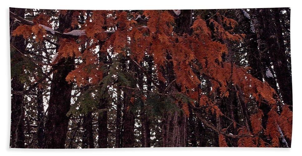 Cedar Bath Sheet featuring the photograph Cedar by Joanne Smoley