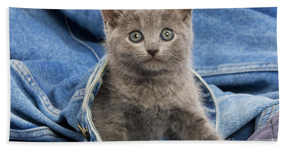 Cat Hand Towel featuring the photograph Chartreux Kitten by Jean-Michel Labat