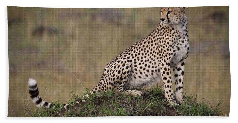 Acinonyx Jubatus Bath Sheet featuring the photograph Cheetah On Termite Mound by John Shaw