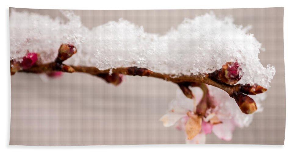 Iris Holzer Richardson Bath Sheet featuring the photograph Cherryblossom With Snow by Iris Richardson