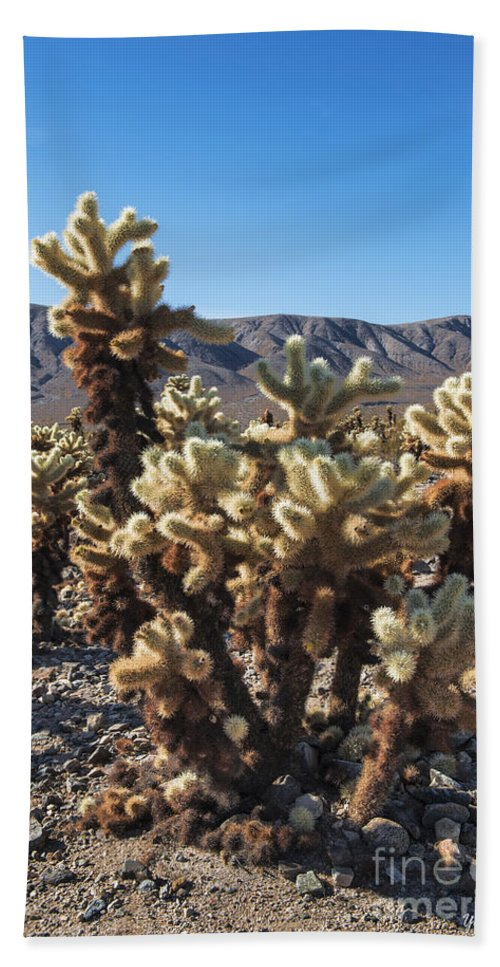 Cholla Cactus Garden Hand Towel featuring the photograph Cholla Cactus by Yefim Bam