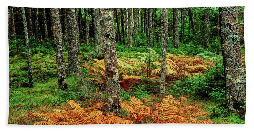 Photography Bath Sheet featuring the photograph Cinnamon Ferns And Red Spruce Trees by Panoramic Images