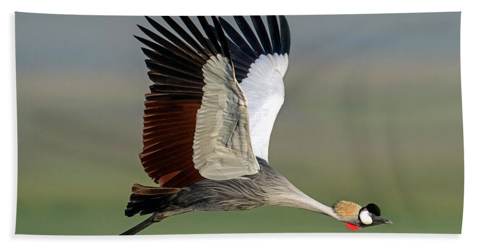 Photography Hand Towel featuring the photograph Close-up Of Grey Crowned Crane by Panoramic Images