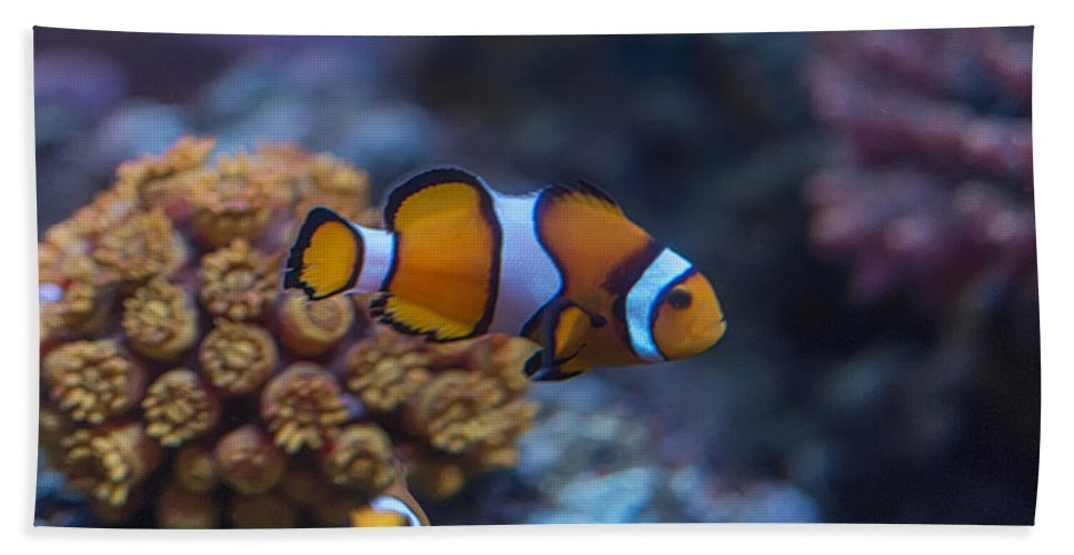 Anemone Bath Sheet featuring the photograph Clownfish by Paulo Goncalves