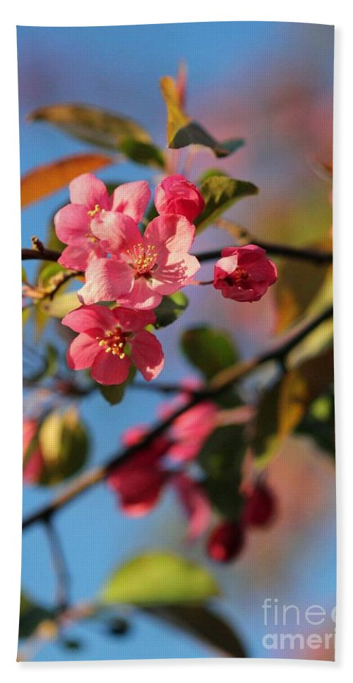 Tree Hand Towel featuring the photograph Crab Apple by Stephanie Hanson