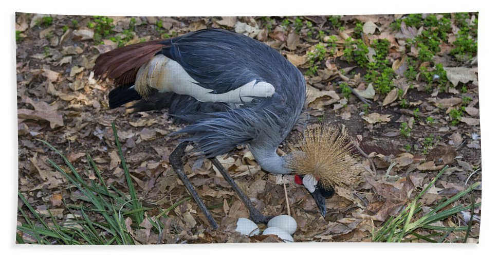 Crowned Crane Hand Towel featuring the photograph Crowned Crane And Eggs by Anthony Mercieca