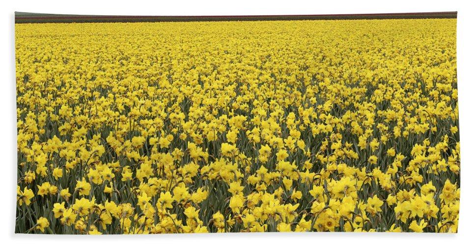 Daffodil Field Bath Sheet featuring the photograph Daffodil Field by John Shaw