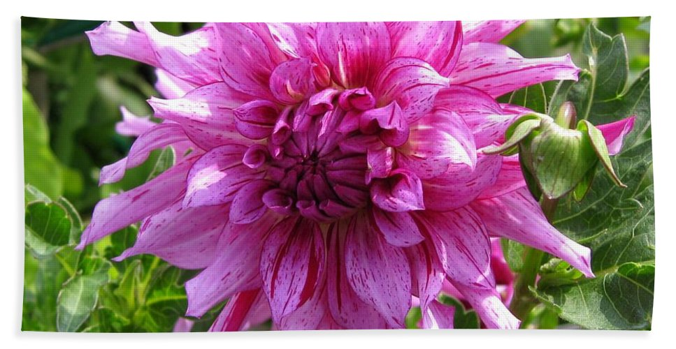 Dahlia Hand Towel featuring the photograph Dahlia Named Annette C by J McCombie