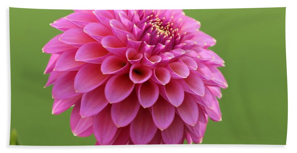 Mccombie Hand Towel featuring the photograph Dahlia Named Skipley Spot Of Gold by J McCombie