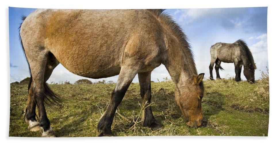 Dartmoor Hand Towel featuring the photograph Dartmoor Pony by Lee Avison