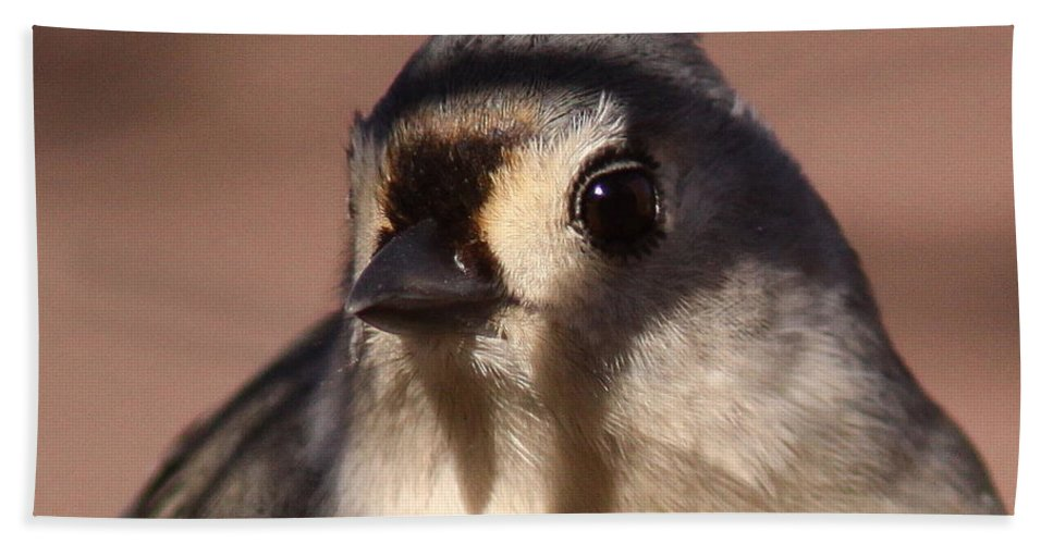 Tufted Titmouse Bath Sheet featuring the photograph Decked Out by Travis Truelove