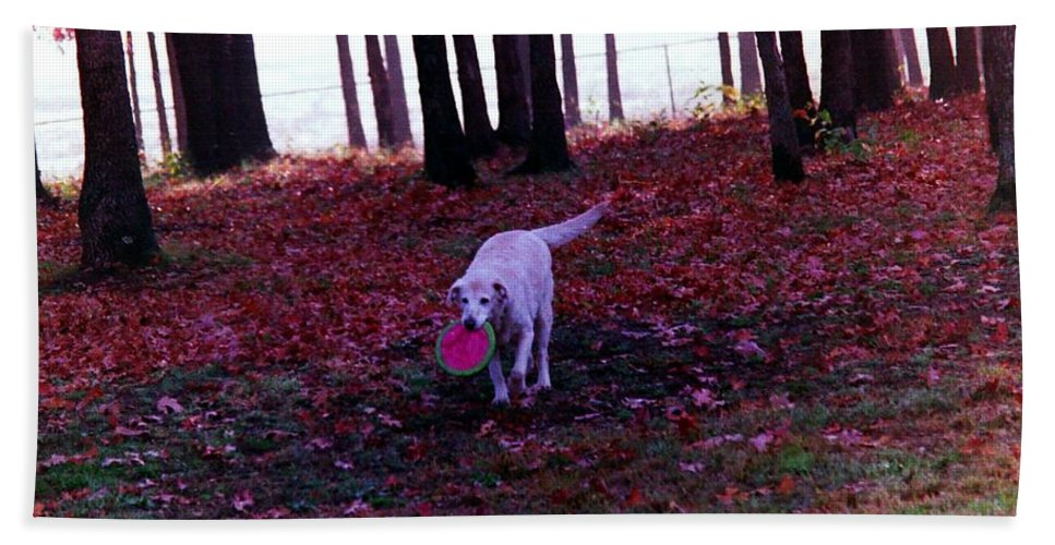 Dogs Hand Towel featuring the photograph Dog by Karl Rose