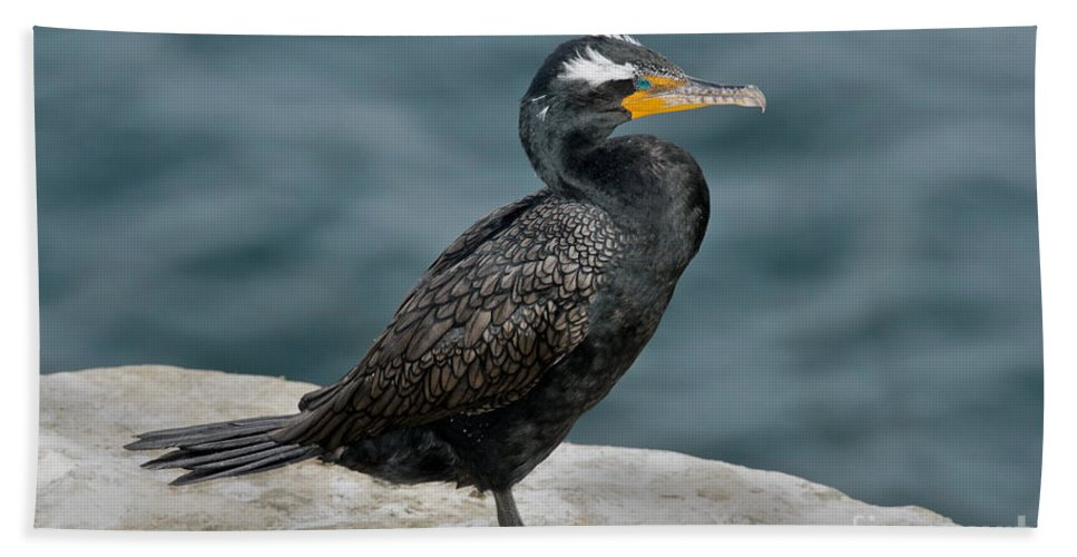 Double-crested Cormorant Hand Towel featuring the photograph Double-crested Cormorant by Anthony Mercieca