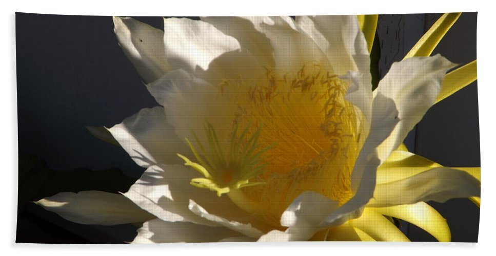 Dragon Fruit Hand Towel featuring the photograph Dragon Fruit Blossom In Profile by Jussta Jussta