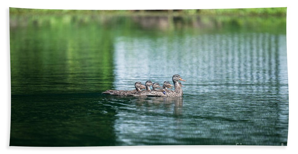 Ducks Bath Sheet featuring the photograph Duck Call by Dale Powell