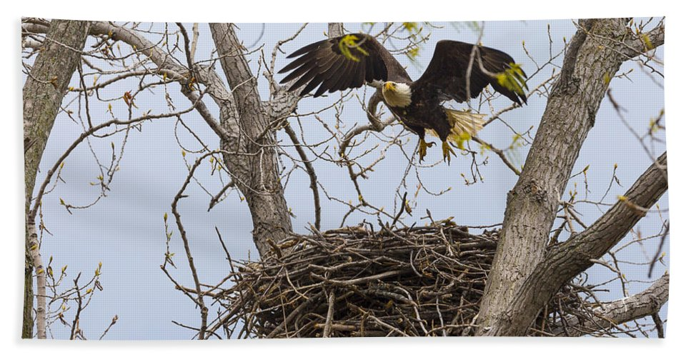 Adult Bath Sheet featuring the photograph Eagle Nest by Jack R Perry