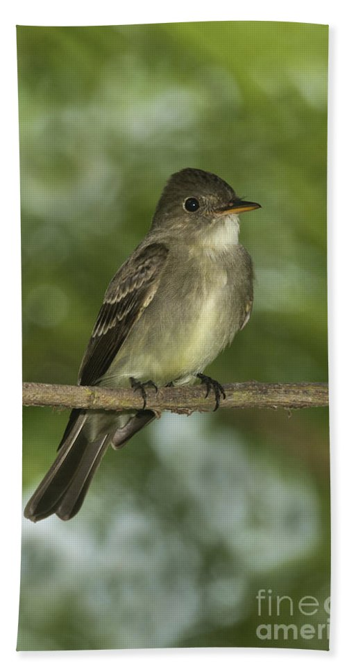 Eastern Wood-pewee Hand Towel featuring the photograph Eastern Wood Pewee by Anthony Mercieca