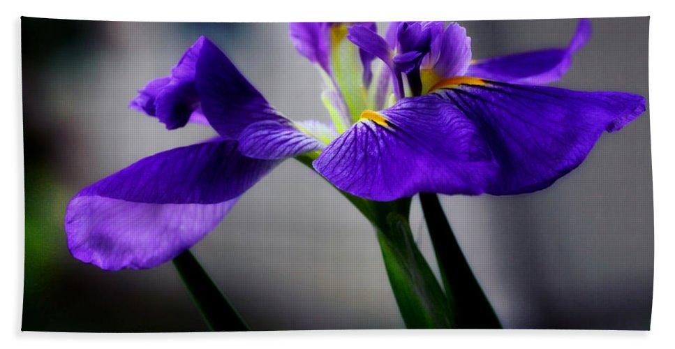 Iris Hand Towel featuring the photograph Elegant Iris by Lucy VanSwearingen
