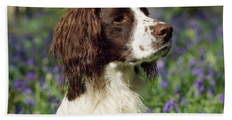 English Springer Spaniel Bath Sheet featuring the photograph English Springer Spaniel Dog by John Daniels