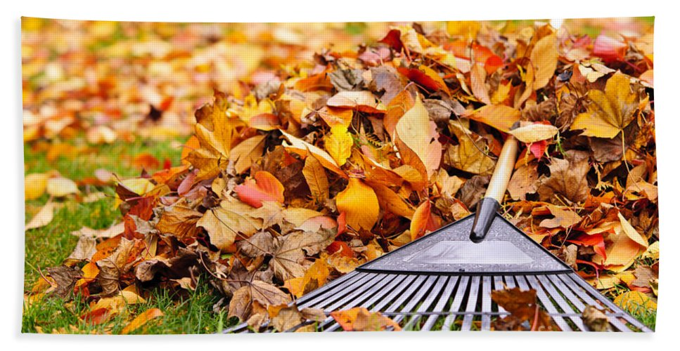 Rake Hand Towel featuring the photograph Fall Leaves With Rake by Elena Elisseeva