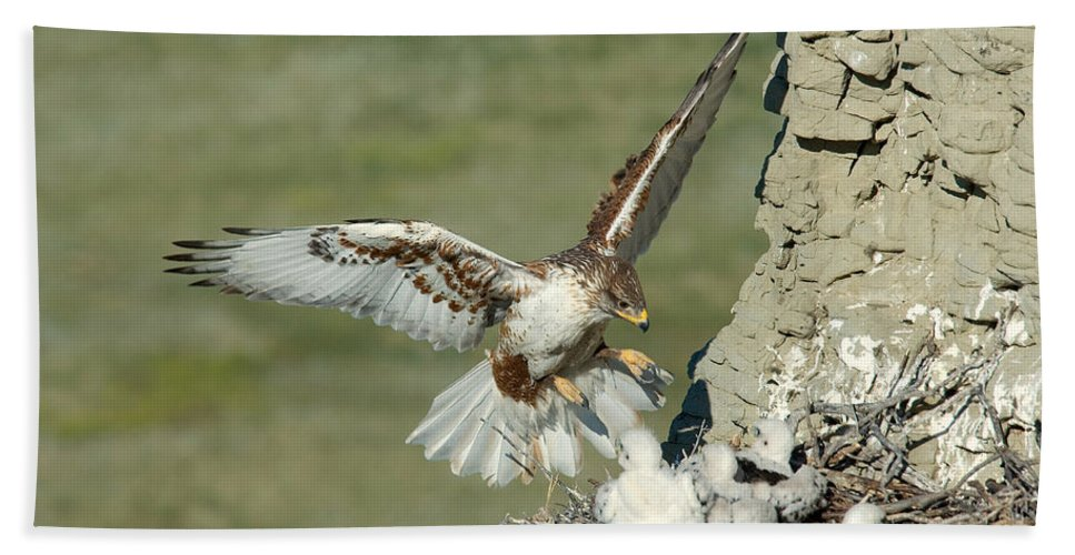 Fauna Hand Towel featuring the photograph Ferruginous Hawk And Chicks by Anthony Mercieca