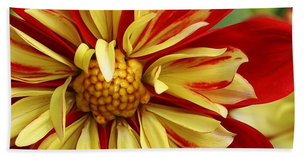 Flora Hand Towel featuring the photograph Fireworks by Bruce Bley