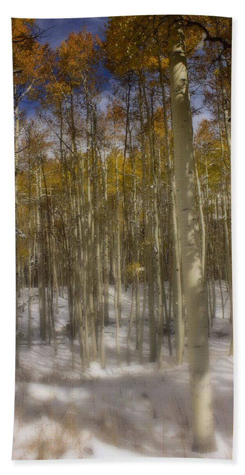 Aspen Bath Sheet featuring the photograph First Snow by Ellen Heaverlo