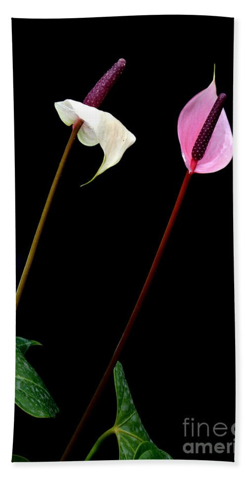 Anthurium Bath Sheet featuring the photograph Flamingo Flower by Antoni Halim