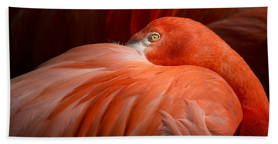 Flamingo Hand Towel featuring the photograph Flamingos by TouTouke A Y