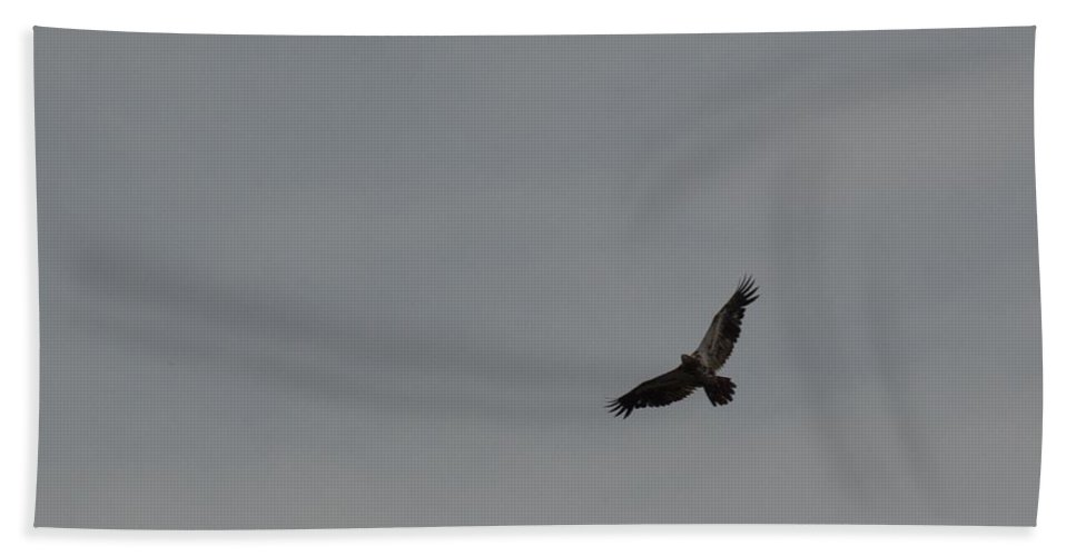 Bird Hand Towel featuring the photograph Flying High by Linda Kerkau