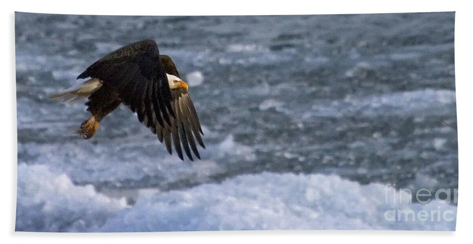 Haliaeetus Leucocephalus Bath Sheet featuring the photograph Flying Over Ice by J L Woody Wooden