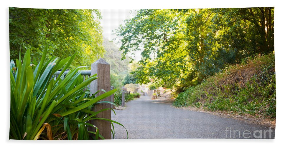 Waterfall Gully Hand Towel featuring the photograph Forest Pathway by Tim Hester