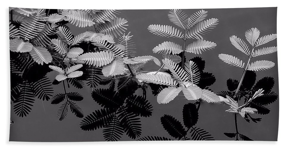 Black & White Bath Sheet featuring the photograph Frilly by Joyce Baldassarre