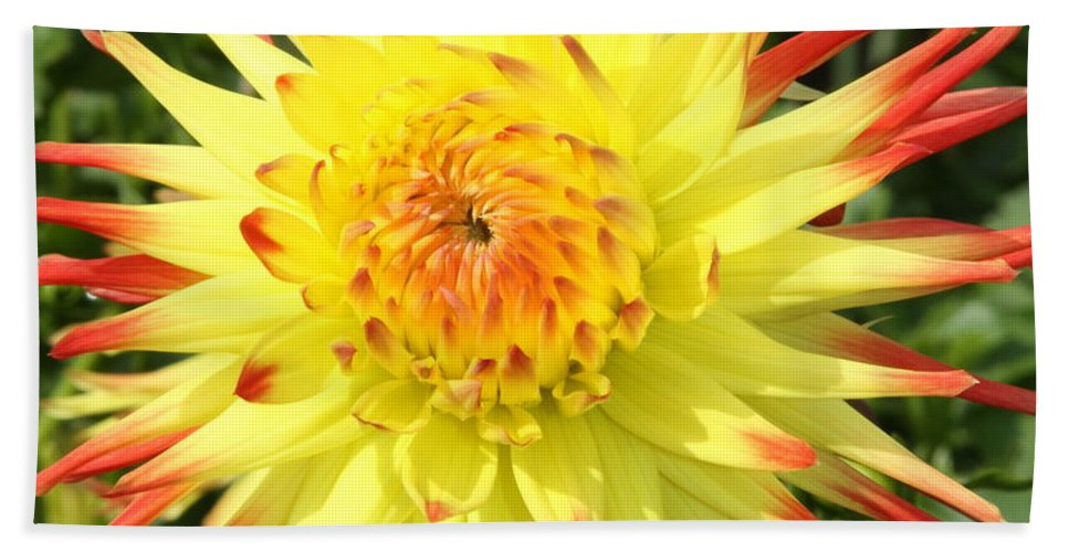 Dahlia Bath Sheet featuring the photograph Garden Sunshine by Christiane Schulze Art And Photography