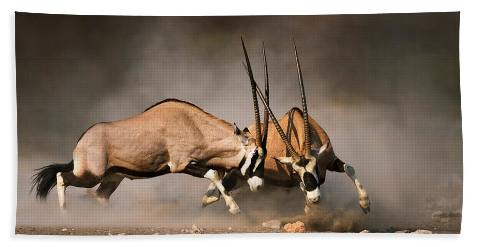Gemsbok Hand Towel featuring the photograph Gemsbok Fight by Johan Swanepoel